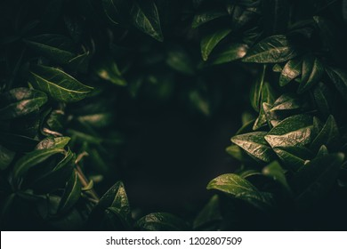 Royalty Free Hd Leaf Wallpaper Stock Images Photos Vectors