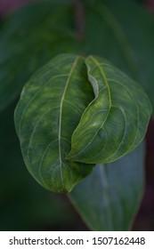 Dark green leaves on moody background