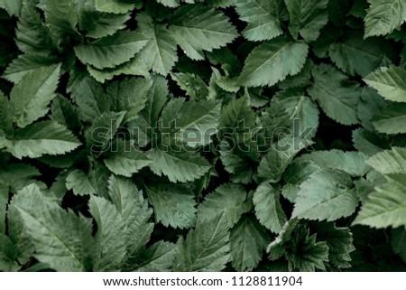 Dark Green Leaves Wallpaper Leaves Sharp Stock Photo Edit Now