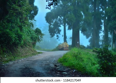 Dark green misty road in Takdah, a small village in Darjeeling district.