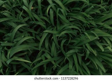 Dark Green Moody Grass Background