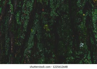 Dark green moss on a tree trunk