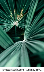 Dark green palm leaf abstract background