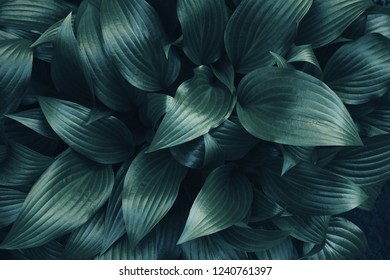Dark green toned background pattern of leaves.