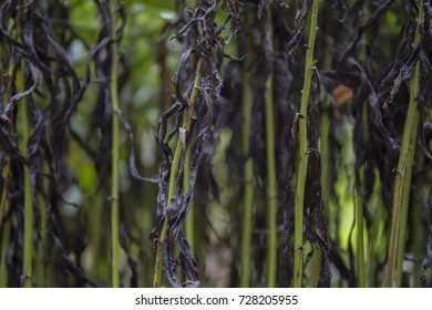 Dark and green wilted stems background