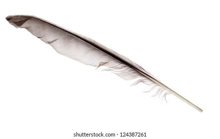 dark grey feather isolated on white background