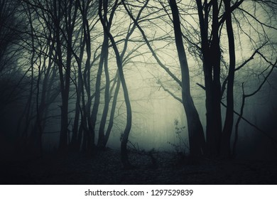 dark halloween borest background, scary landscape with tree silhouettes
