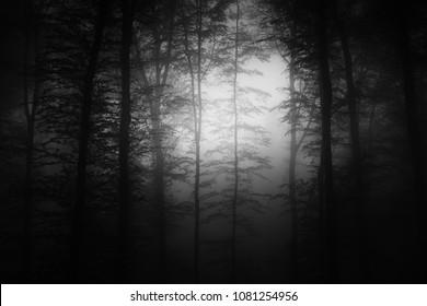 dark halloween forest background