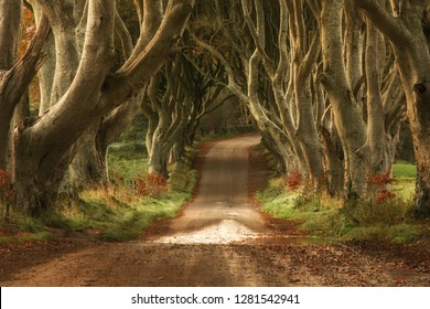 Dark Hedges Antrim Northern Ireland morning spectacular Wood