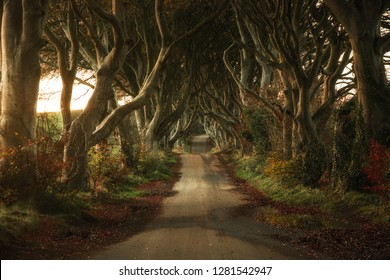 Dark Hedges Antrim Northern Ireland morning