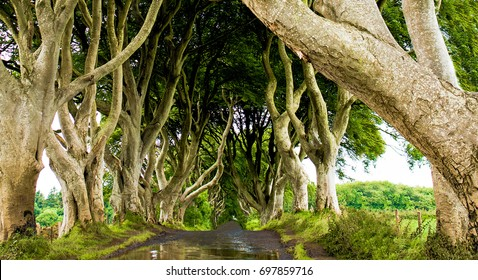 The Dark Hedges in Armoy Co. Antrim, Beautiful tree road landscape in Northern Ireland. Travel by car to your air in summer.