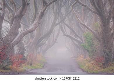 Dark Hedges in autumn season , North Ireland, mystic tree line drive and fog.