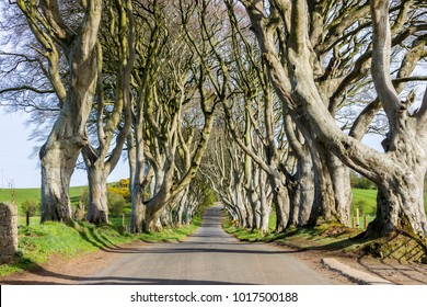 The Dark Hedges, an avenue of beech trees in Ballymoney, County Antrim, Northern Ireland, featured as a popular filming location for fantasy shows