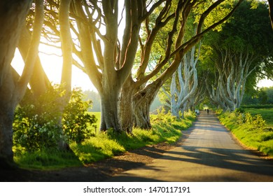The Dark Hedges, an avenue of beech trees along Bregagh Road in County Antrim. Atmospheric tree tunnel has been used as filming location in popular tv series. Tourist attractions in Nothern Ireland.