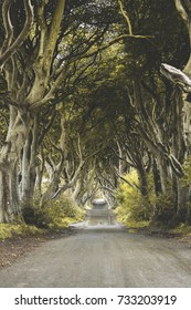 The Dark Hedges, an avenue lined with beech trees in County Antrim, Northern Ireland.