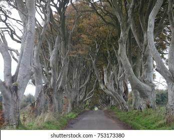 The Dark Hedges - beautiful avenue with beech trees in the north of Ireland near Belfast, Ireland