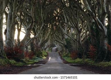 The Dark Hedges, Beech tree avenue in Ballymoney, County Antrim, Northern Ireland