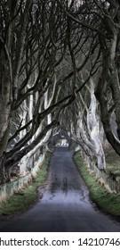 The Dark Hedges, county Antrim, Northern Ireland, UK