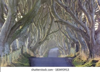 The Dark Hedges from County Antrim, Northern Ireland