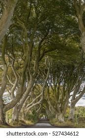 The Dark Hedges, County Antrim, Northern Ireland.