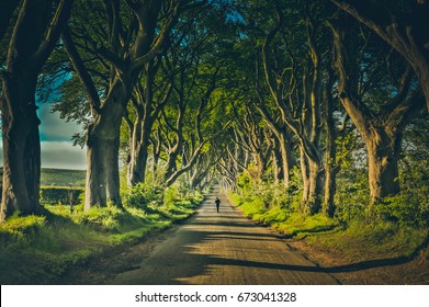 The Dark Hedges famous location from the tv series Game of Thrones.