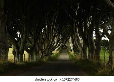 The Dark Hedges - famous tourist site in Northern Ireland