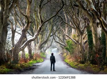 The Dark Hedges, in Ireland.