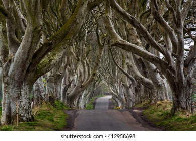 The Dark Hedges near Ballymoney, Co. Antrim, Northern Ireland.  Feautured in the Game of Thrones as the Kings Road.