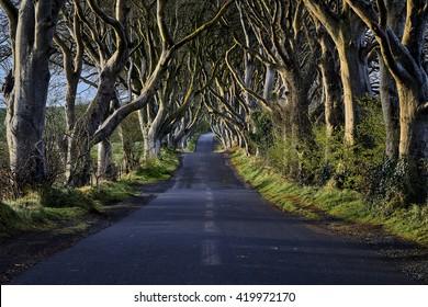 The Dark Hedges near Ballymoney, Co. Antrim, Northern Ireland