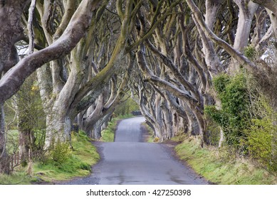 The Dark Hedges near Ballymoney, Co. Antrim, Northern Ireland. Featured in the Game of Thrones as the Kings Road.