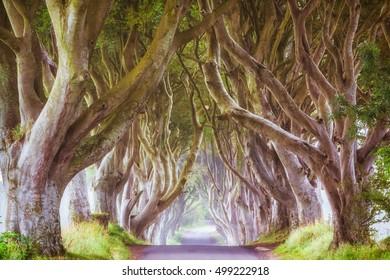 The dark hedges, North Ireland