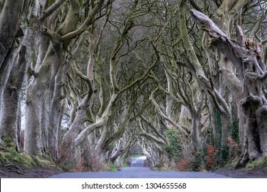 The Dark Hedges in Northern Ireland, beech tree avenue, Northern Ireland