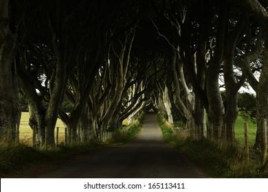 Dark hedges Northern Ireland Game of Thrones film location