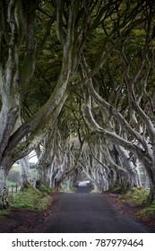 Dark Hedges Northern Ireland Game of Thrones