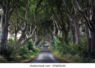 The Dark Hedges, a unique beech tree tunnel road near Armoy, county Antrim, Northern Ireland