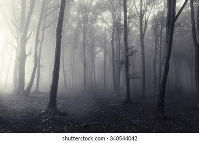 Dark horror forest during a foggy autumn day