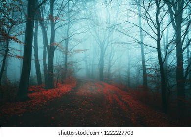 Dark horror path in moody foggy forest