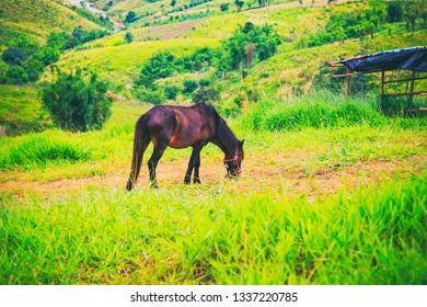 Dark horse in the green grass field.