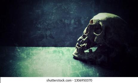 Dark human skull model