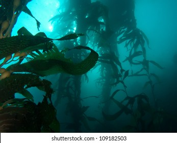 Dark image of underwater kelp forest with room for copy