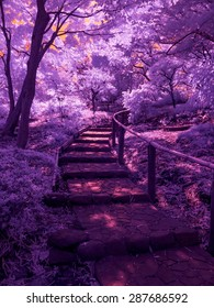 The Dark & Invisible Path. Extended infrared with a specially altered camera. All light invisible to the naked eye. Tokyo, Japan