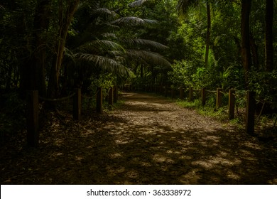 Dark jungle on Mahe Island in Seychelles
