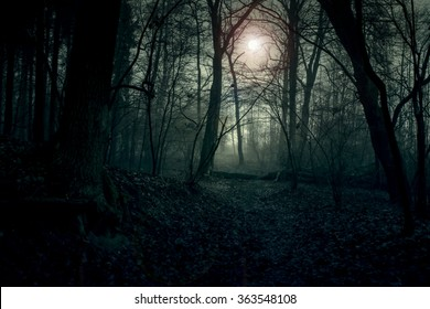 Dark landscape. Forest in the fog illuminated by the setting sun