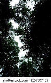 Dark landscape looking up at the sky Forest