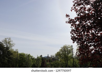 A dark leafed maple tree with trees land the Logan Utah temple in the distance