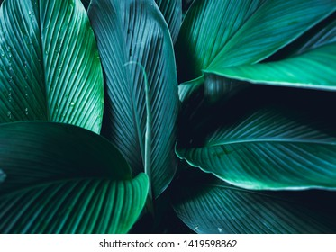 Dark Leaves background Blue green Leaf surface
