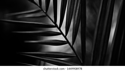 Dark leaves of a tree unique black and white photo
