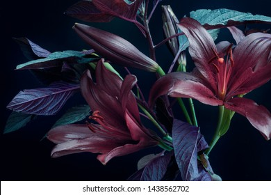 dark lilies on a dark background, abstract bouquet colors, fresh foliage and buds.