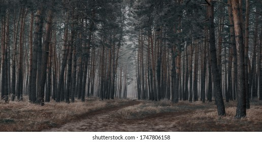 Dark lonely foggy scary pine forest landscape - Shutterstock ID 1747806158