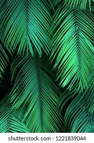 Dark, lush green background texture of tropical, exotic palm leaves in a jungle.